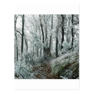 Forêt de Freezed de scène d'hiver Carte Postale
