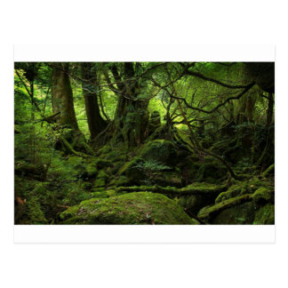Forêt de jungle de mousse cartes postales