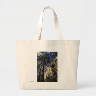 Forêt de peuplement vieux sacs