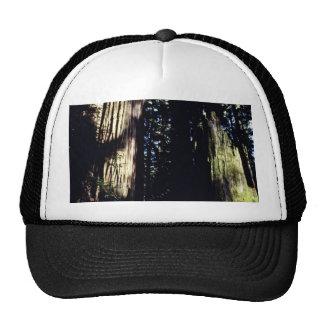 Forêt de Redwoood Casquette De Camionneur