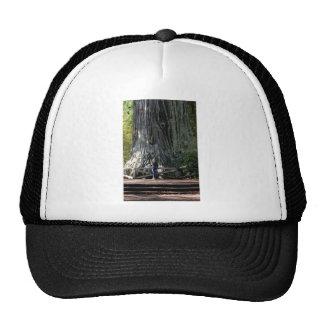 Forêt de séquoia casquette de camionneur
