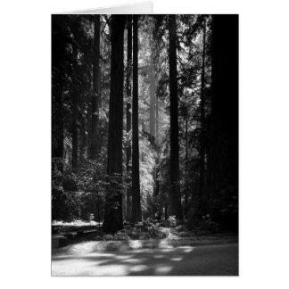 Forêt de séquoia, Grove du fondateur, 1966 Carte De Vœux