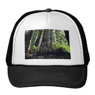 Forêt de séquoia, Prairie Creek Casquette