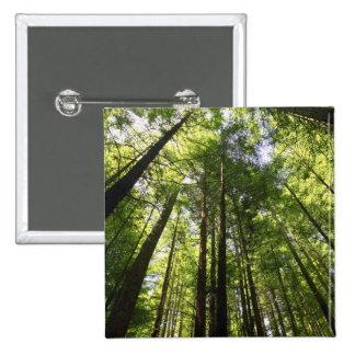 Forêt de séquoia, Rotorua, Nouvelle Zélande Pin's