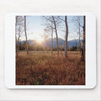 Forêt de Sun d hiver d arbres de nature Tapis De Souris