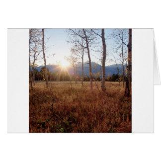 Forêt de Sun d'hiver d'arbres de nature Carte De Vœux