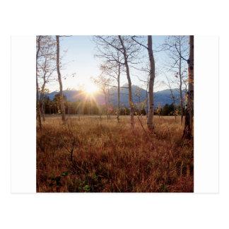 Forêt de Sun d'hiver d'arbres de nature Carte Postale