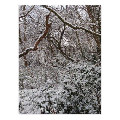 Forêt d'Epping en hiver Cartes Postales