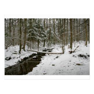 Forêt d'hiver cartes postales