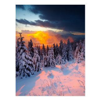 Forêt d'hiver carte postale