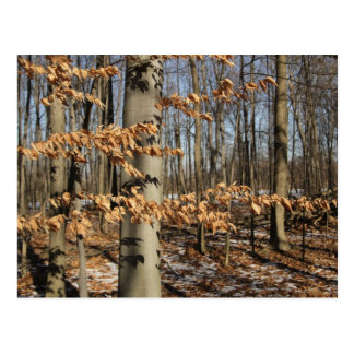 Forêt d'hiver du Michigan Carte Postale