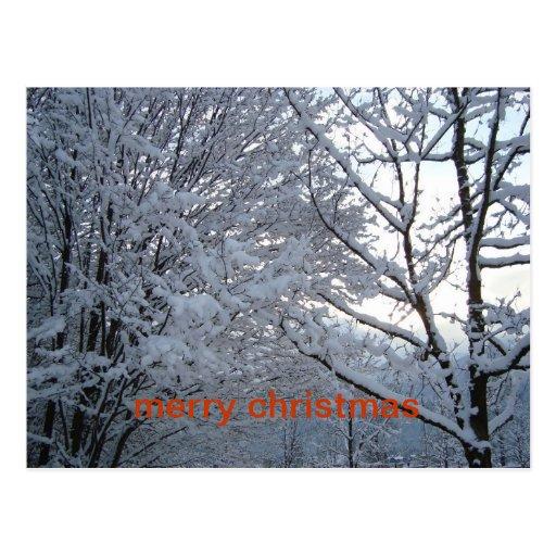 Forêt d'hiver, Joyeux Noël Carte Postale