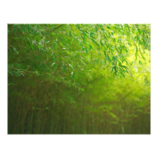 Forêt en bambou prospectus 21,6 cm x 24,94 cm