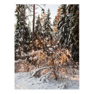 Forêt en hiver carte postale