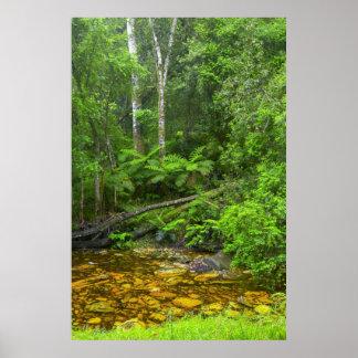 Forêt, les forêts Montane de Knysna-Amatole Poster