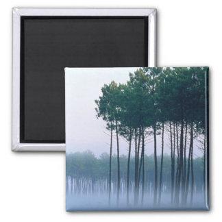 Forêt les Landes France de pin Aimant Pour Réfrigérateur