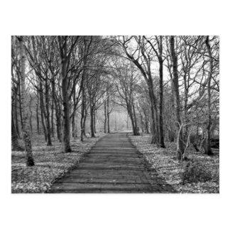 Forêt, noir/blanc carte postale