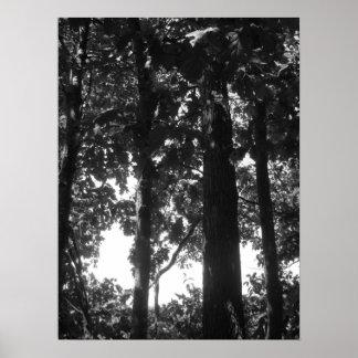 Forêt noire et blanche affiches
