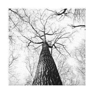 Forêt noire et blanche d'arbres grands toiles