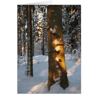 Forêt pendant l'hiver cartes de vœux