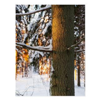 Forêt pendant l'hiver carte postale