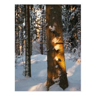 Forêt pendant l'hiver cartes postales