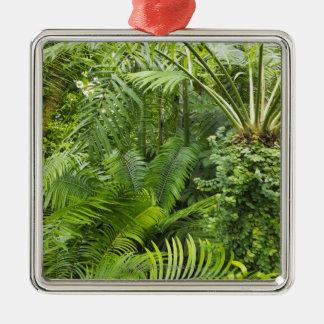 Forêt tropicale d'Amazone, Amazonie, Brésil 2 Ornement Carré Argenté