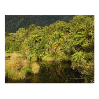 Forêt tropicale île du sud Nouvelle Zélande Carte Postale