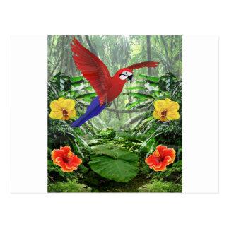 Forêt tropicale tropicale cartes postales
