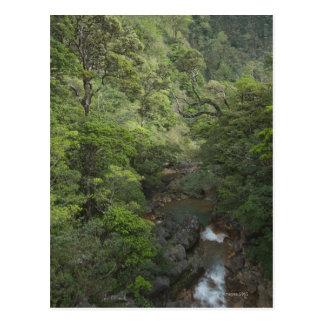 Forêt tropicale tropicale, Miravalles, Cordillère Carte Postale