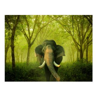 Forêt verte mammifère renversante d'éléphant carte postale