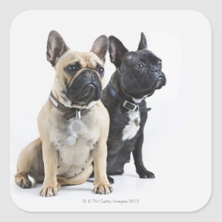 Formation et obéissance de chien autocollants