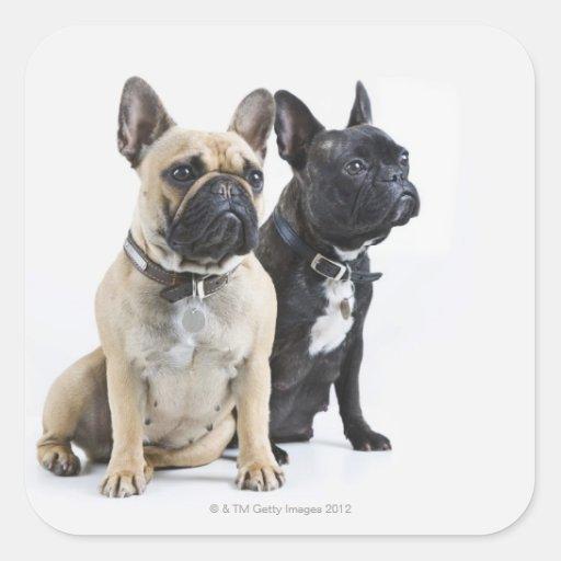 Formation et obéissance de chien sticker carré