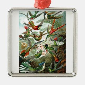 Formes 1899 d'art d'espèces de colibri de copie de ornement carré argenté
