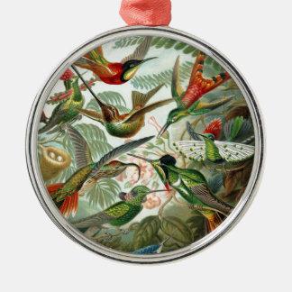 Formes 1899 d'art d'espèces de colibri de copie de ornement rond argenté