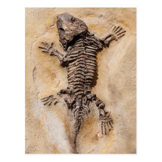 Fossile de dinosaure carte postale