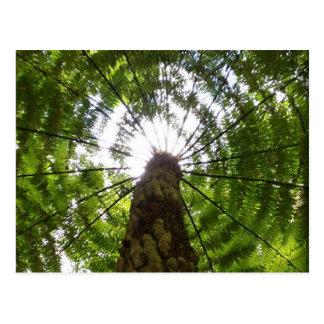 Fougère d'arbre carte postale