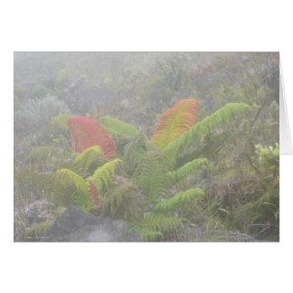 Fougères dans la brume - Haleakala, Maui Cartes
