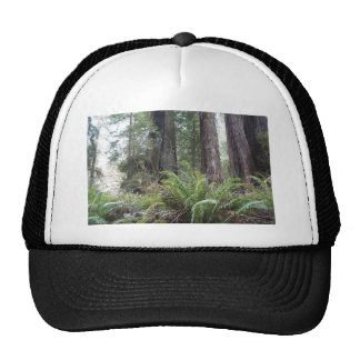 Fougères d'épée de réserve forestière de séquoias casquette