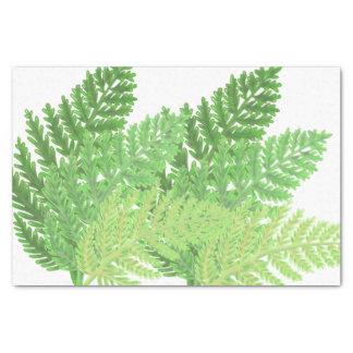 Fougères vertes papier mousseline