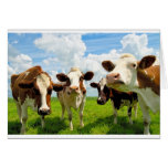 Four chatting cows