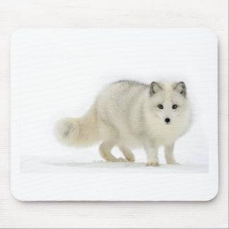 Fox arctique blanc tapis de souris