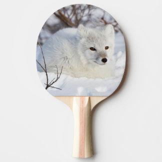 Fox arctique en hiver raquette tennis de table