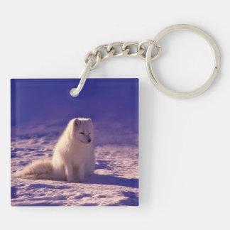 Fox arctique porte-clé carré en acrylique double face