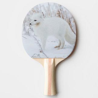 Fox arctique raquette de ping pong