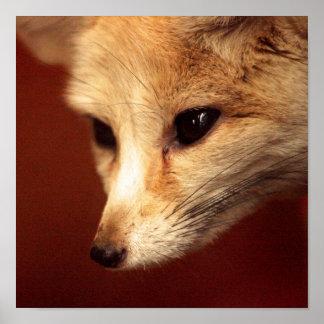 Fox de Fennec Posters