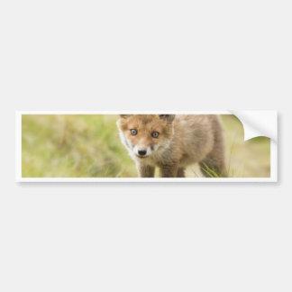 Fox rouge adorable CUB Autocollant De Voiture