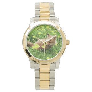 Fox rouge de bébé dans le domaine vert avec les montres bracelet