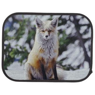 Fox rouge se reposant sur la banque de neige, tapis de voiture