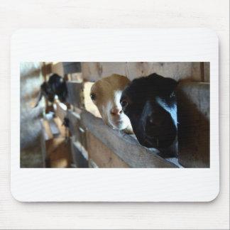 Foyer de chèvre tapis de souris